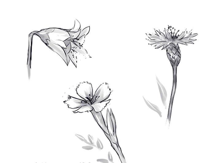 Прелестные полевые цветочки