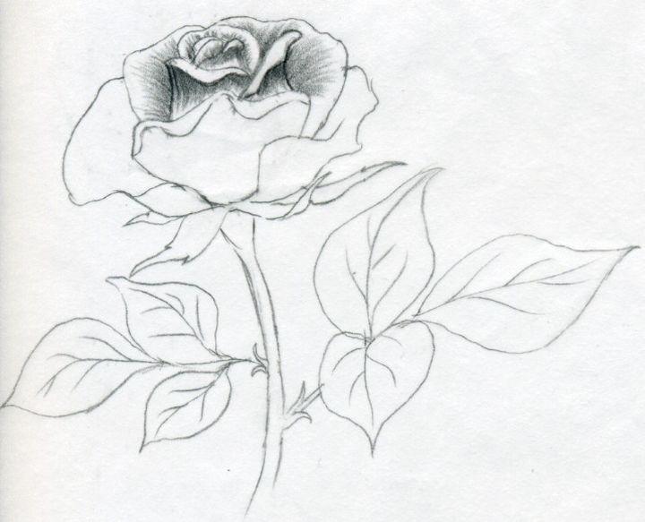 Плоский рисунок розы
