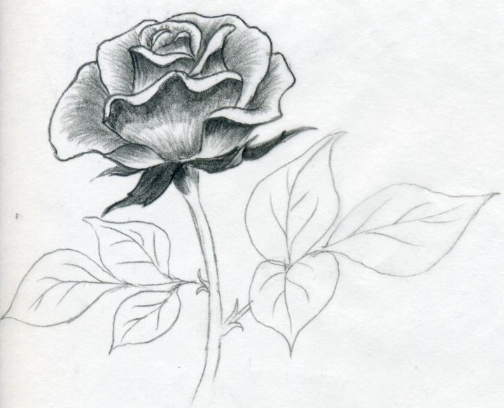 Штриховка затемняющая розу