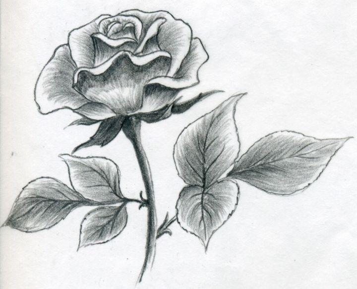 Заштрихованная роза