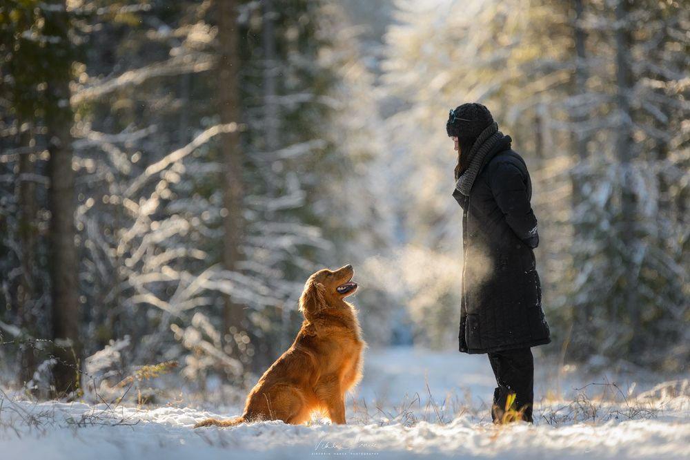 Собака в подарок сыну