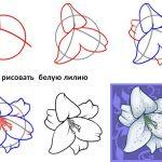Фото 69: Этапы рисования лилии