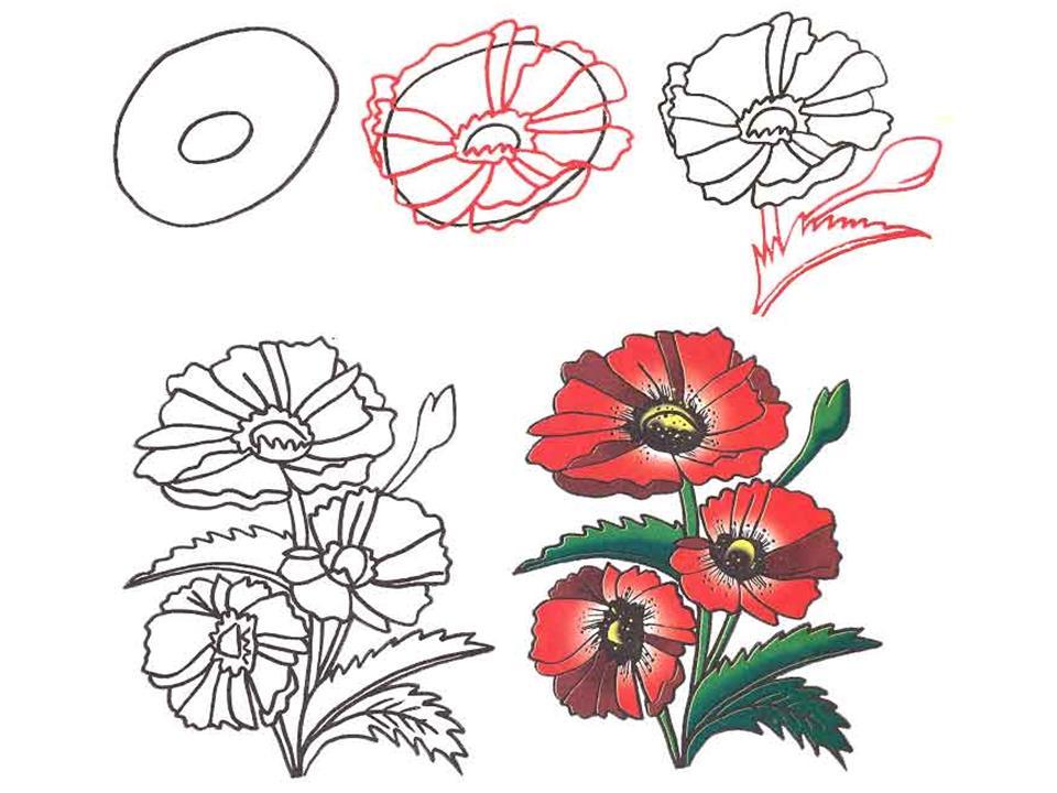 Этапы рисования маков своими руками