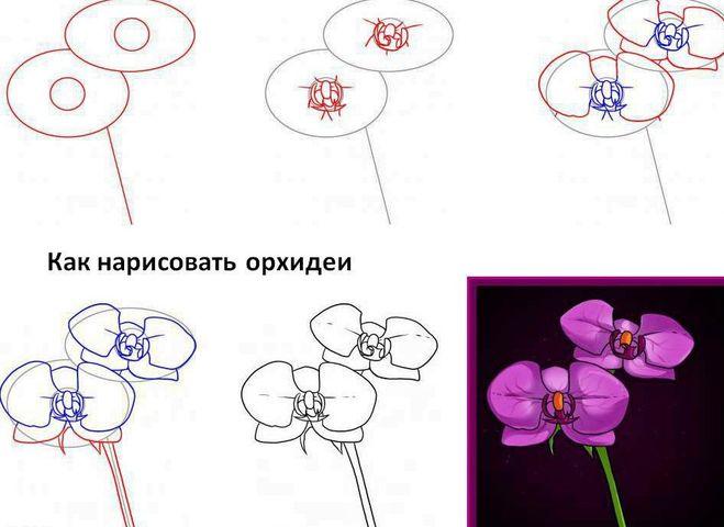 какправлильно нарисовать цветок мастер класс