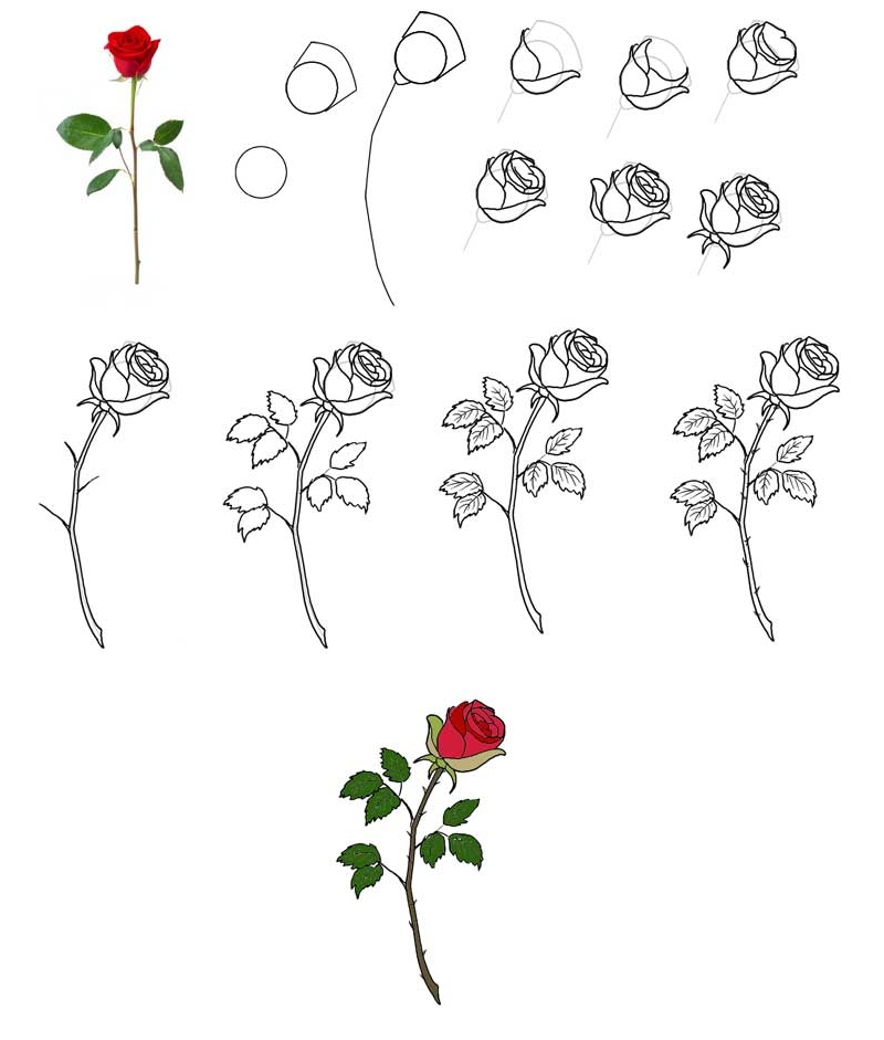 Рисование простой розы своими руками