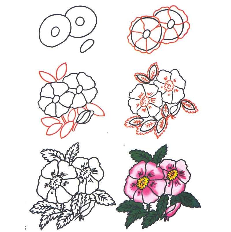 Цветы раскраска с образцом 42