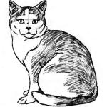 Фото 16: Готовый рисунок сидячей кошки