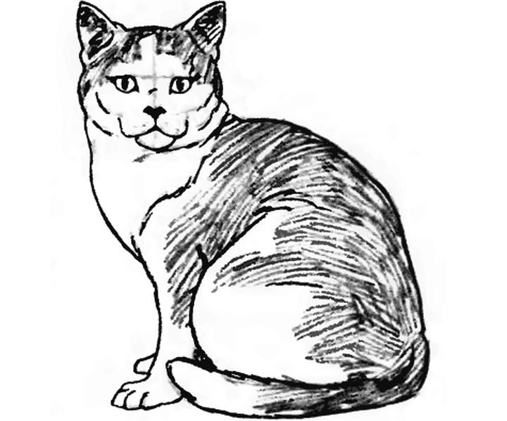 Готовый рисунок сидячей кошки