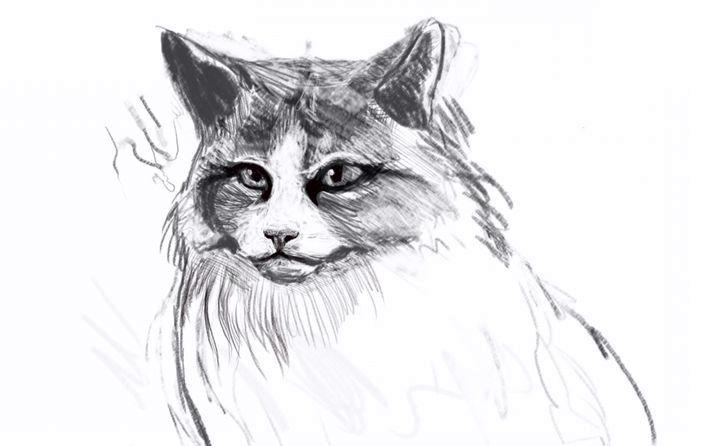 Вырисовывание глаз кошки