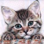 Фото 27: Использование цветных карандашей для рисования кошек