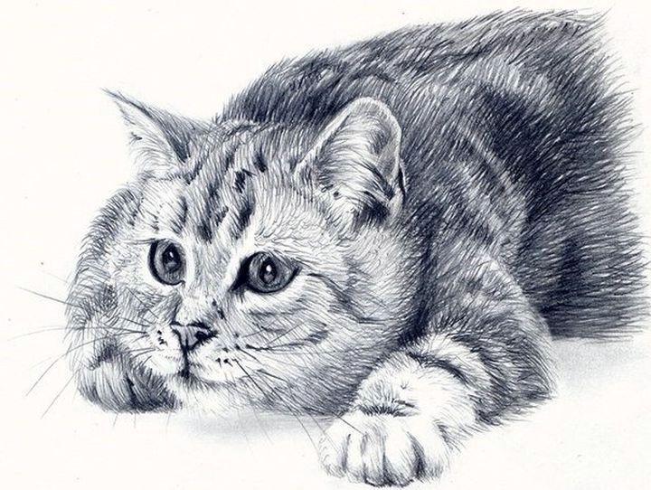 Красивый рисунок кошки
