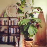Фото 39: Украшение домашних растений к Новому Году