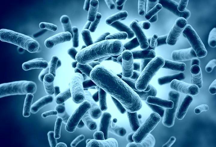 Болезнетворные микроорганизмы вокруг нас