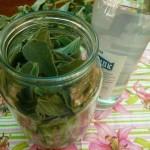 Настойка из листьев шелковицы