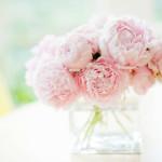 Фото 15: Нежно-розовые пионы