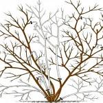 Фото 10: Обрезка садовой голубики