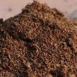 Органические удобрениядля актинидии