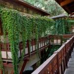 Фото 14: Плющ на балконе
