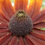 Фото 24: Садовый цветок