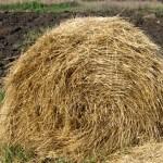 Солома для укрытия почвы
