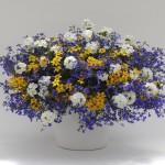 Фото 29: Цветок лобелия ампельная