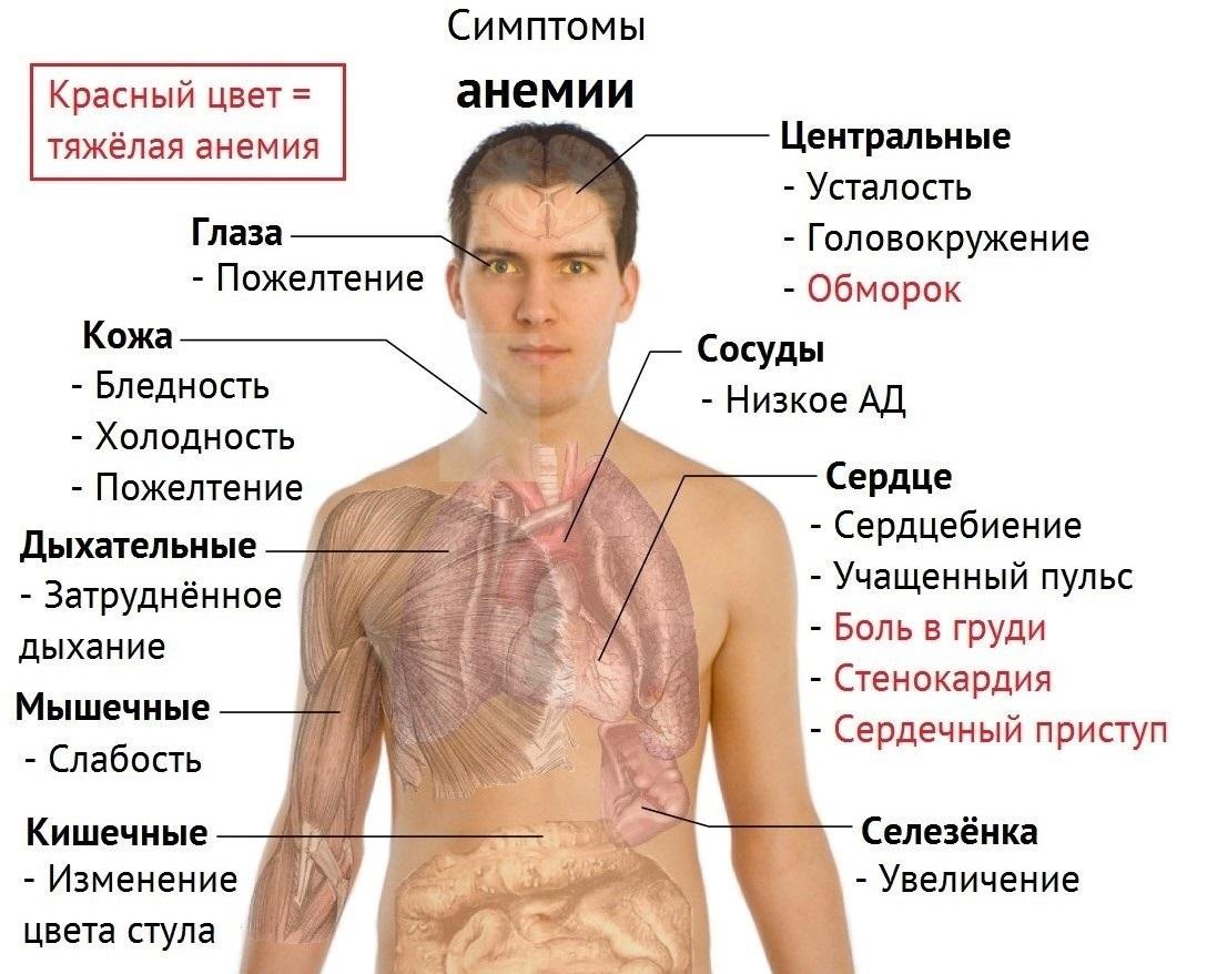 В большинстве случаев увеличенная кровопотеря может обнаруживаться в области пищеварительного канала язва, гастрит и матки фиброма.