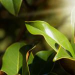 Фото 14: Листья гвоздики