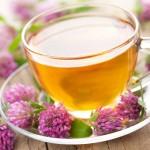 Чай из цветов клевера