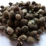 Фото 31: Семена чернокорня