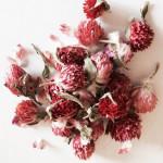 Засушенные цветки красного клевера