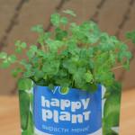 Фото 20: Выращивание клевера в комнатных условиях