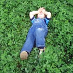 Мягкий газон из клевера