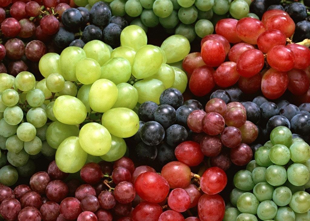 Многообразие сортов винограда