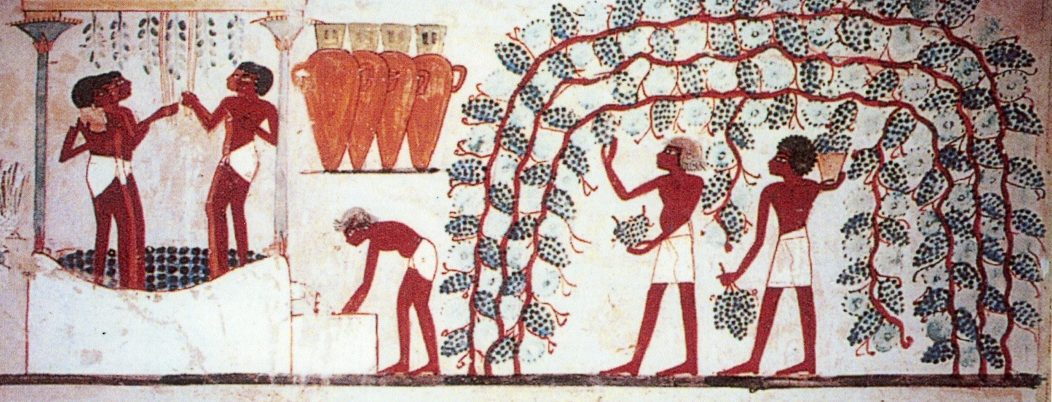 native grains and foreign grapes in ancient egypt In ancient times, grapes were also used for seasoning and in vinegars today wine is a major industry, and over the past decade high-quality kosher wines have become widespread while nearly 100 boutique wineries have sprung up.