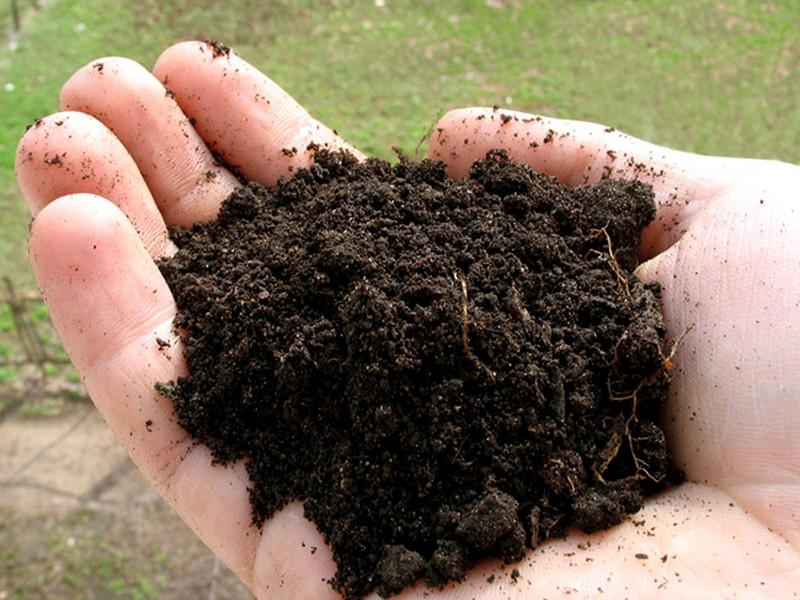 Плодородная почва для рассады абрикоса