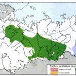 Фото 138: Распространение пихты в России