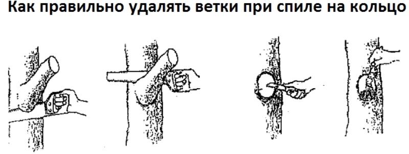 Правильное удаление ветки на кольцо