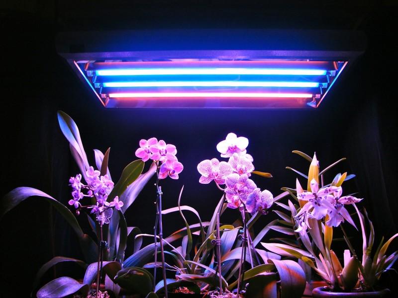 Люминесцентная лампа для выращивания растений и цветов