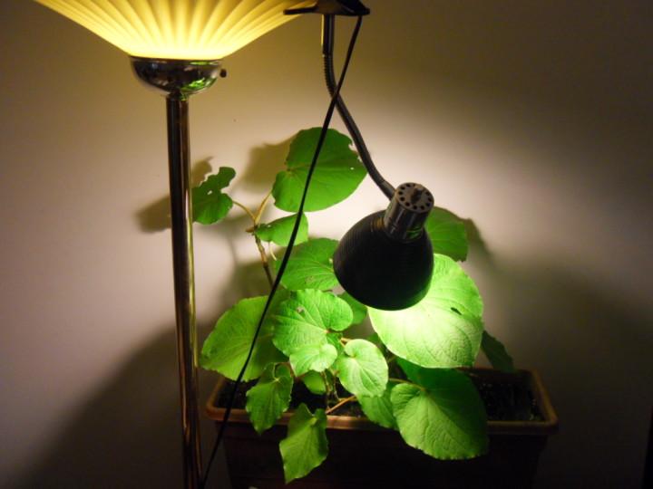 лампы для растений как выбрать