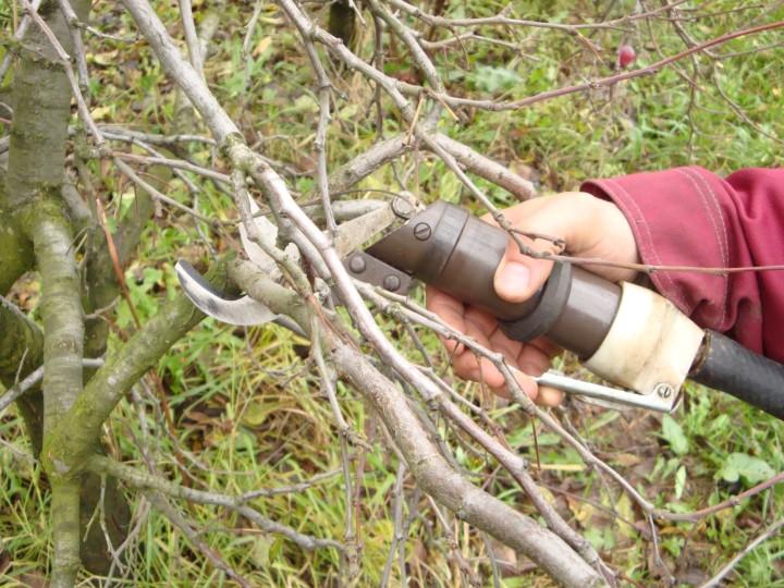 обрезка малины ремонтантной осенью видео