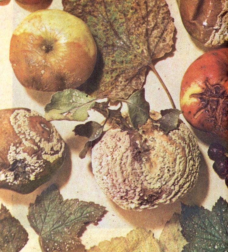 грибы паразиты человека