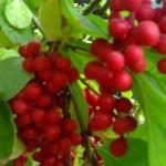Фото 10: Ягоды красные