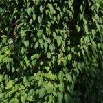 Фото 11: Растение