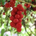 Фото 13: Плод