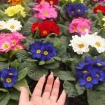 Фото 7: Цветы