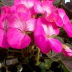 Фото 2: Розовый