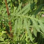 Фото 21: Травы для настойки