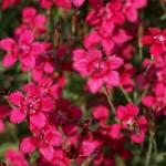 Фото 20: Розовые