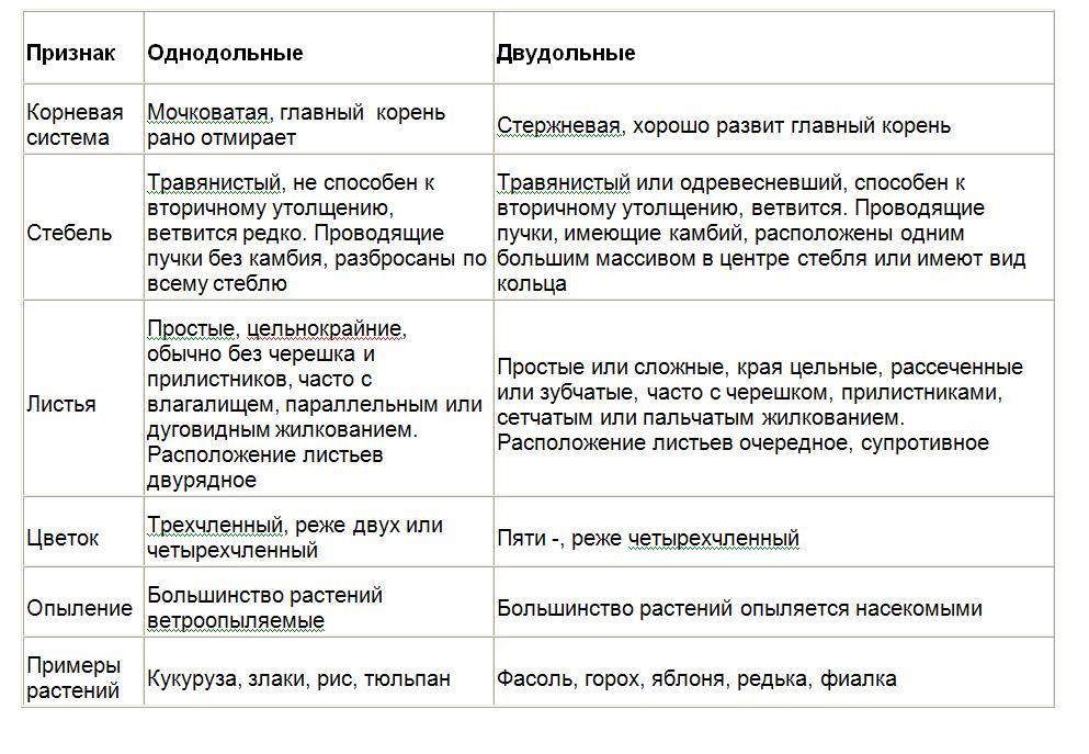 Таблица сравнения однодольных и двудольных растенмий