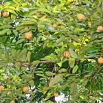Фото 32: На дереве
